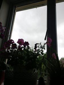 flower before