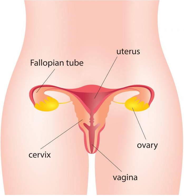 ivf for blocked fallopian tubes | Andrology corner