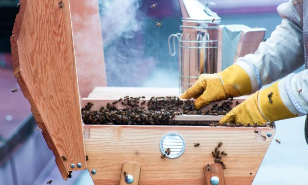 Introduction to Beekeeping – (4) Types of Beekeeping – Hobbyist Beekeeper