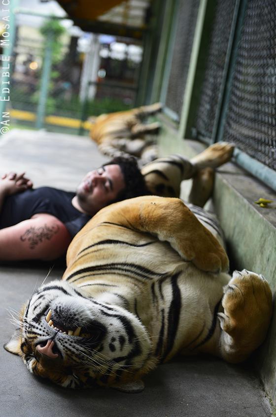 Tiger Kingdom 18