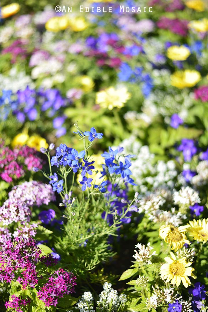 Wildflowers at Epcot