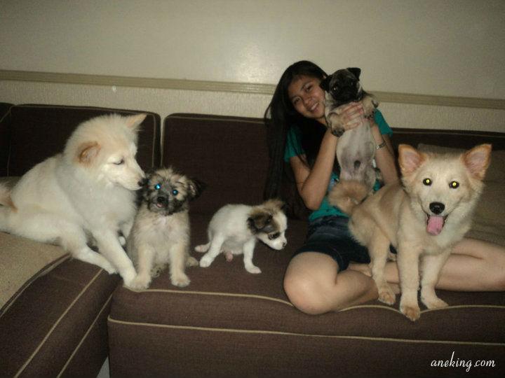 Canine3