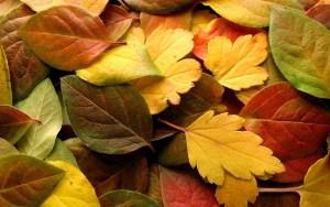 autumn-1332445_1280