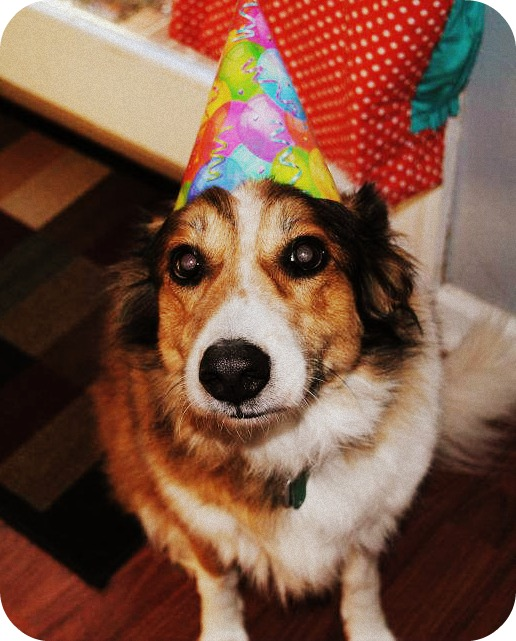 Charlie in a Party Hat