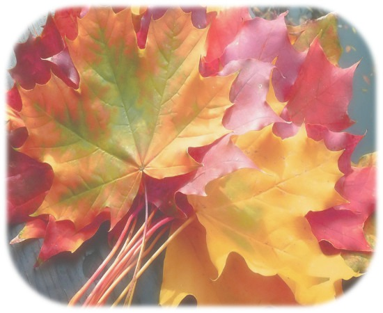 Autumn_leaves_hd_wallpaper