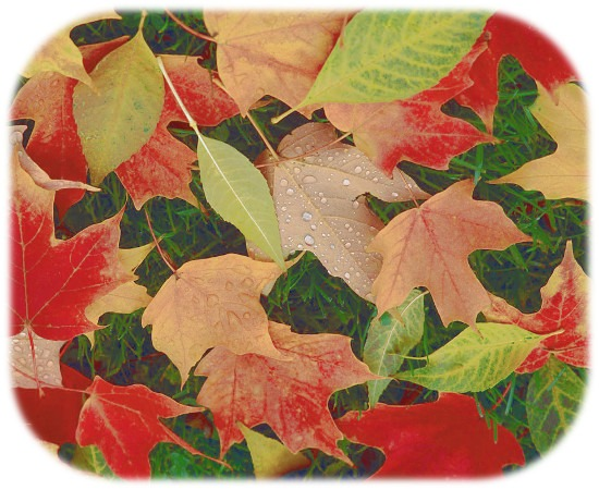 background_autumn