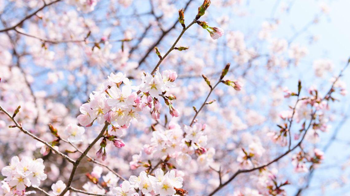 【御所南】春スタイル