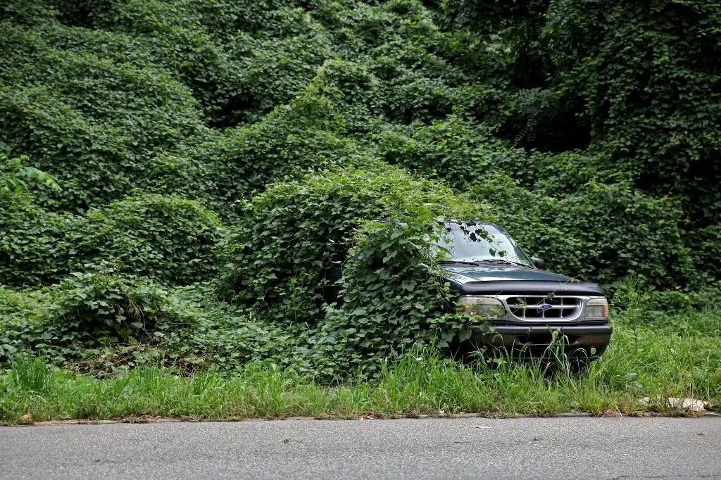 Fotografía de un automovil devorado por el kudzu