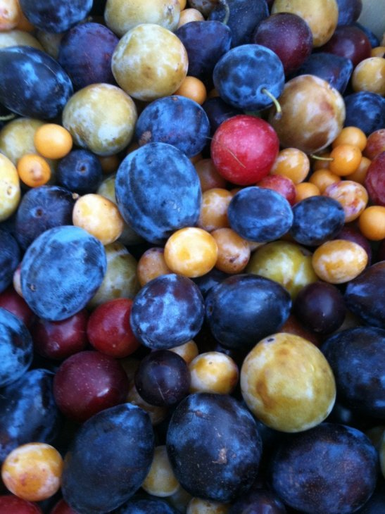 Fotografía mostrando los distintos tipos de frutos que da el árbol de los 40 tipos de frutos.