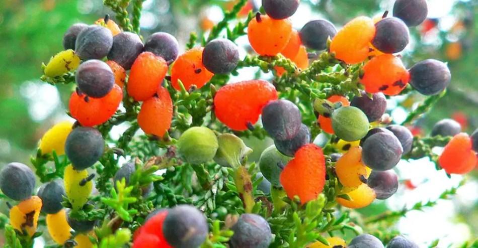 Fotografía de una rama de un mismo árbol con múltiples tipos de frutos.