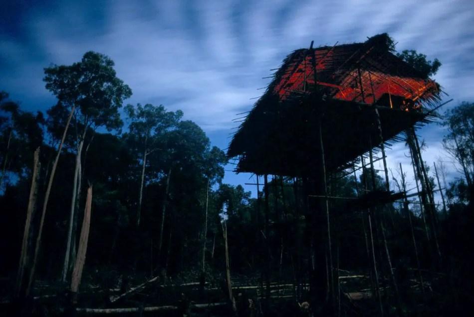 Fotografía de una casa en las alturas de los Los korowai.
