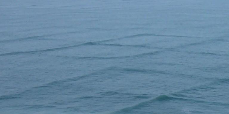 Fitografái de las olas cuadrada de la isla de Ré.