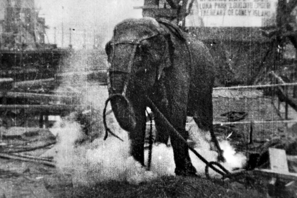 Topsy, la elefanta siendo electrocutada.
