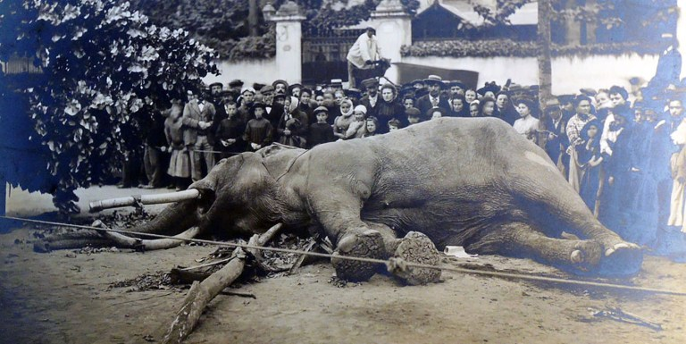 El elefante Fritz, injustamente condenado a muerte.