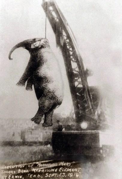 La ejecución de la elefanta Mary.