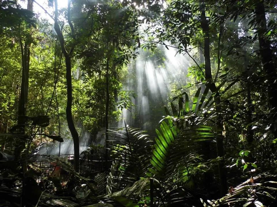 Fotografía del interior de una jungla de Borneo.