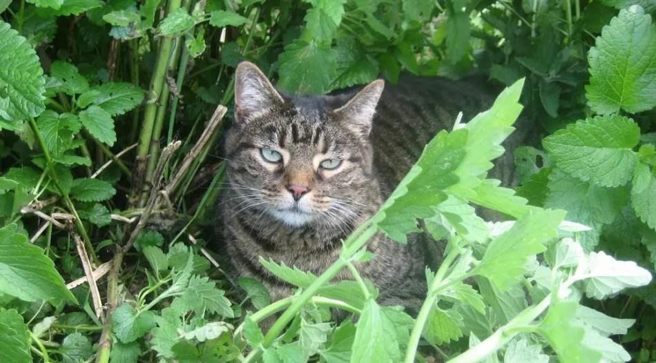 Fotografía de un gato hogareño.