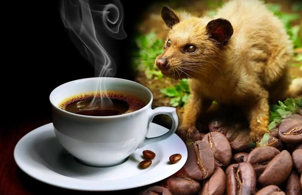 Fotografía de un luwak y una taza de café.