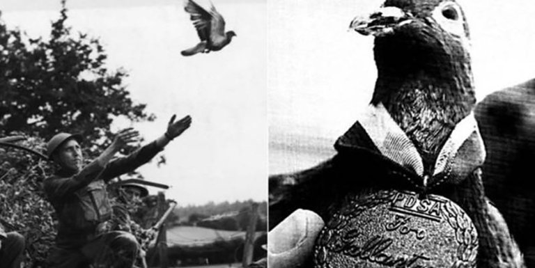 Animales condecorados y animales héroes de guerra, animales héroes