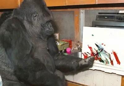 La gorila koko pintando una de sus obras.