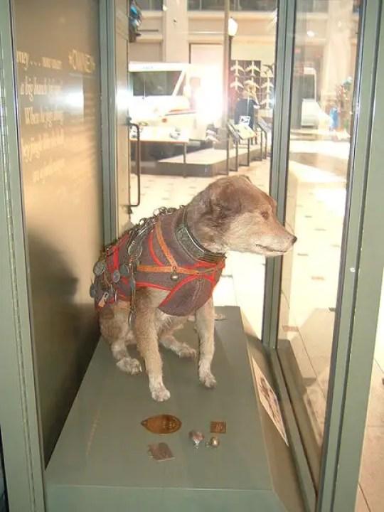 Owney el perro viajero.