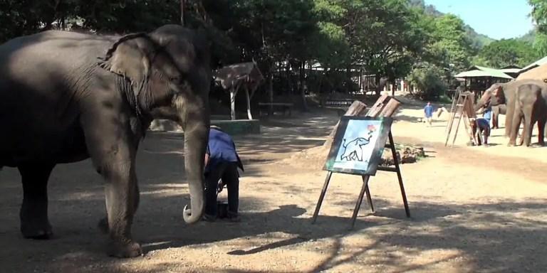 Paya, el elefante que se retrata a si mismo y pinta cuadros artísticos