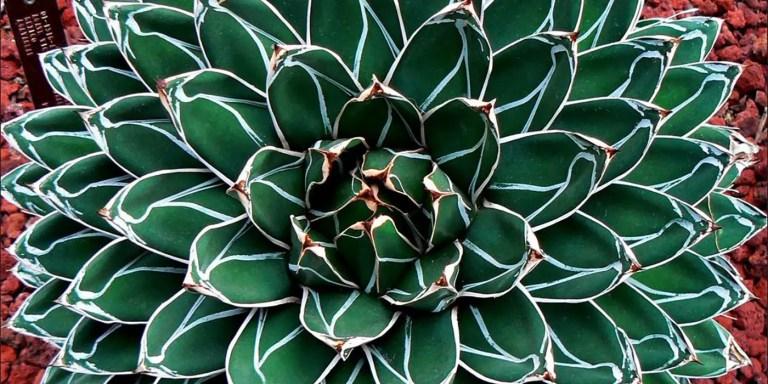 Fractales en la naturaleza, cómo la evolución ha creado fractales naturales