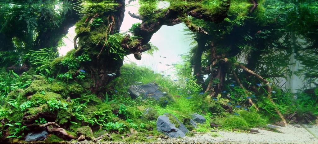 Aquapaisaje simulando un bosque de fantasía.