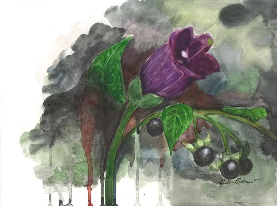 Ilustración de una flor de belladonna