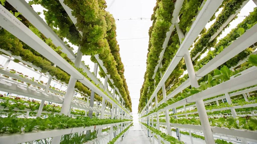 Fotografía de las hileras de plantas en una granja vertical.