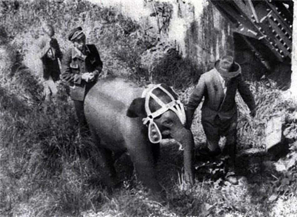 Tuffi siendo rescatada de las orillas del río tras su caída.