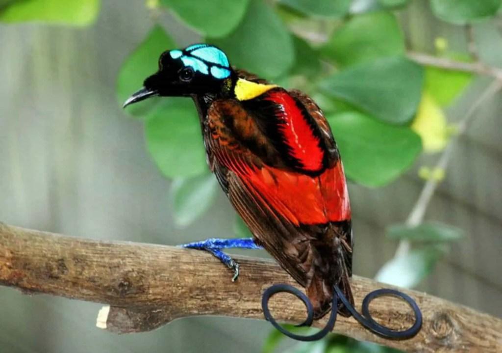 Colorida ave del paraíso.