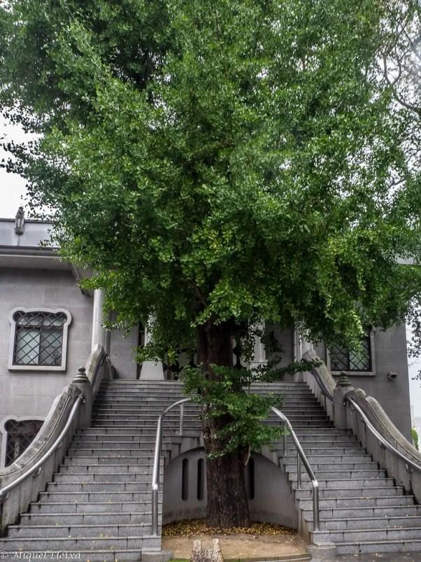 Hosen-ji, el árbol que logró sobrevivir a la bomba atómica.
