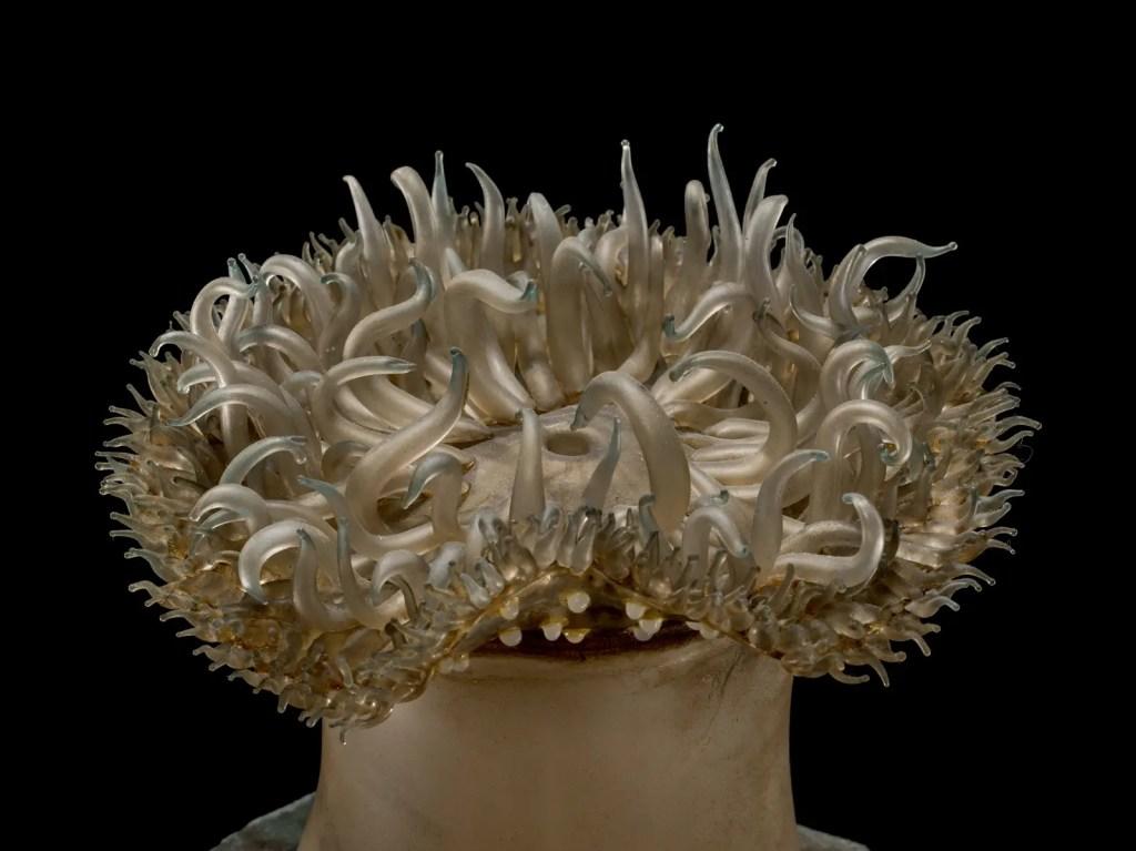 Detalle de uno de los varios seres marinos de vidrio