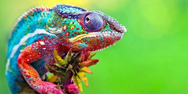 Los animales más coloridos y vibrantes de toda la naturaleza