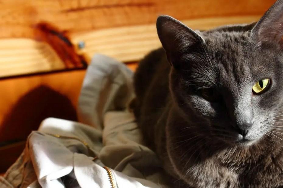 Un gato descansando durante el atardecer.