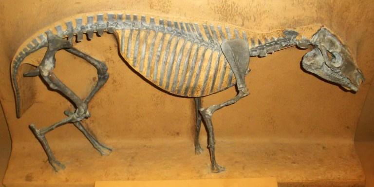 Hyracotherium, el caballo prehistórico poco más grande que un gato