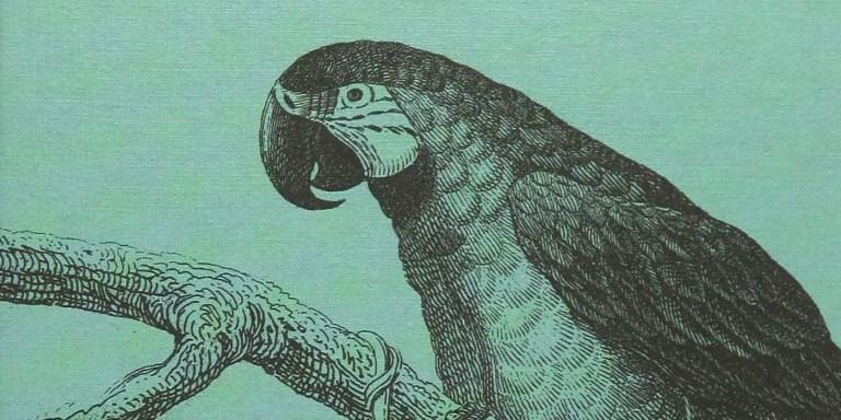 Grabado del loro de Alexander von Humboldt.