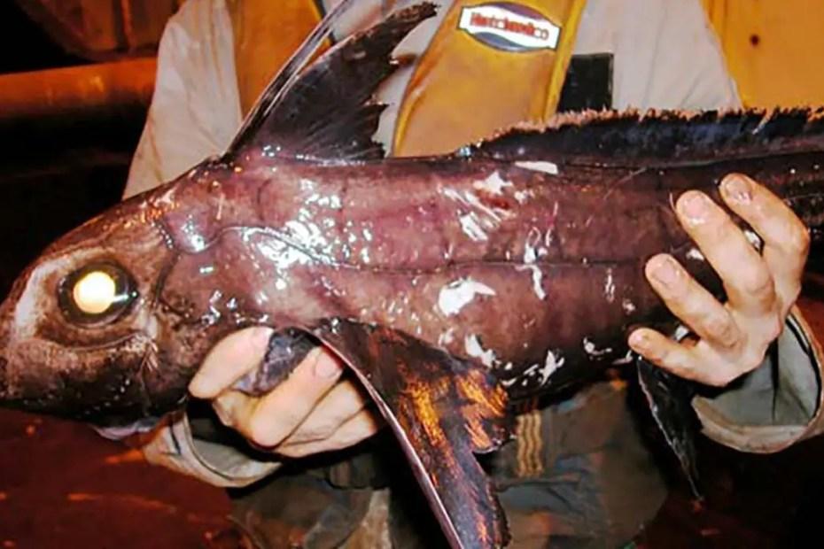 Uno de los seres marinos capturados durante la misión NORFANZ.