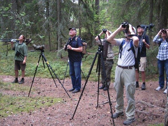 På spaning efter kungsfågel i Örsta-skogen. Foto: Gunnar Hesse