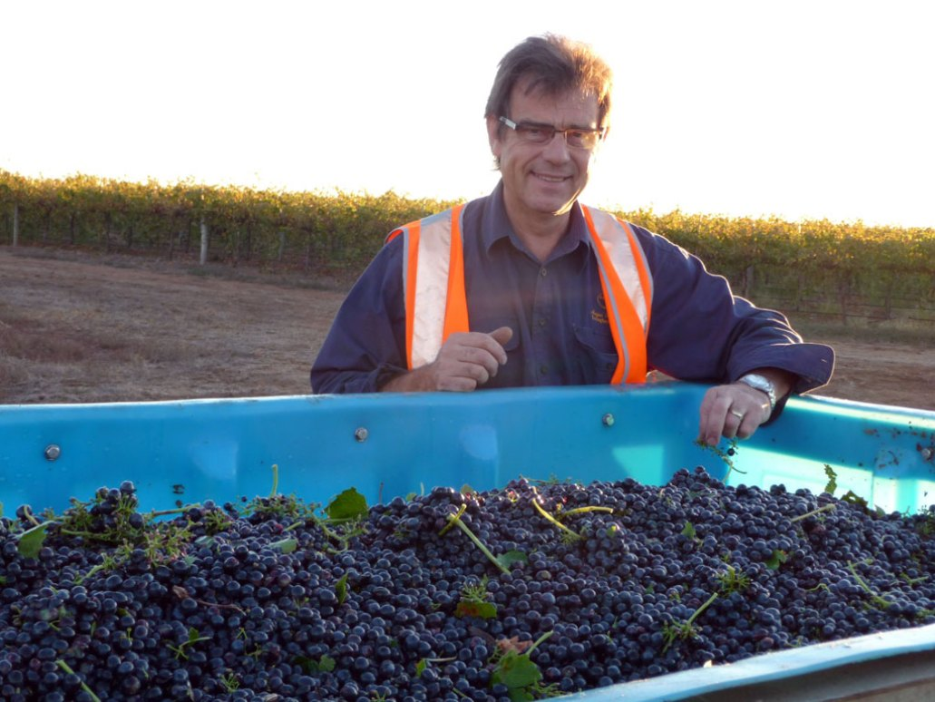 Angas Plains Wines - Phil Cross checking the grapes