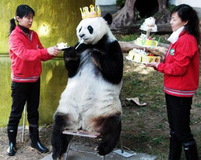 8219-birthday-panda