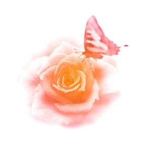 1326577_rose_and_butterfly