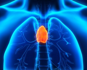 Your Thymus