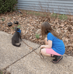 Tried to take our cat on a walk. He was not a fan.
