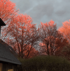Picture at sunset when a break in the cloud colored the tops of trees in bright red.