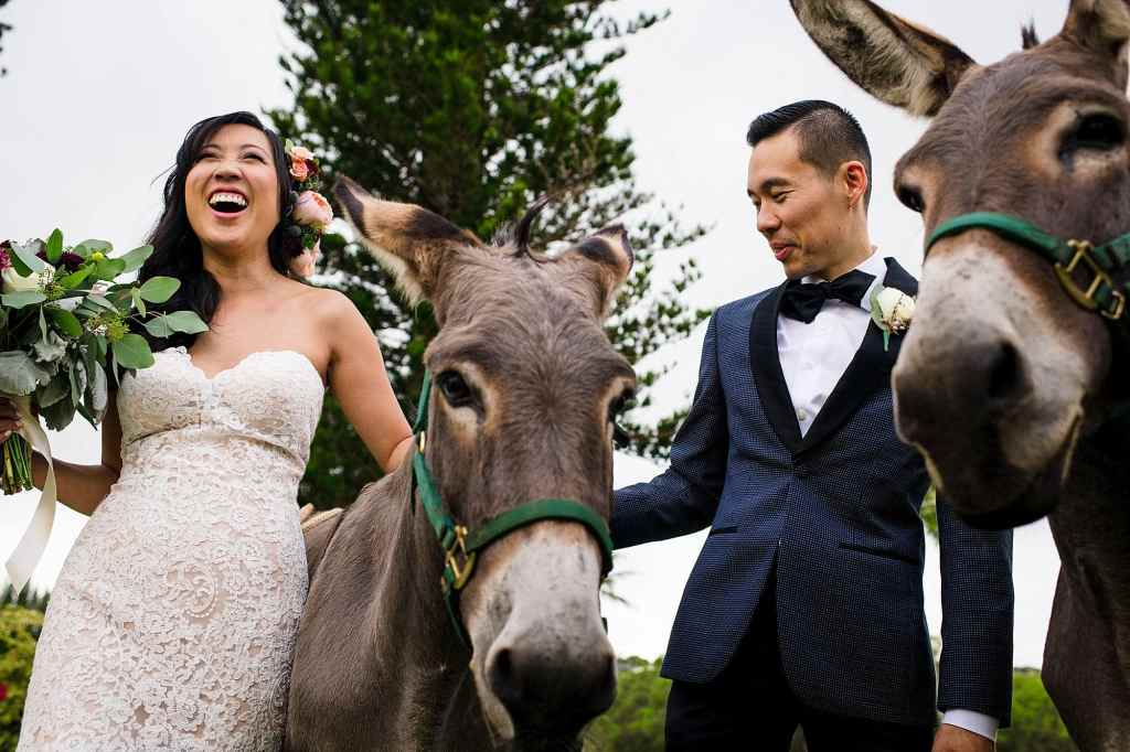 bride and groom with animals at cocktail hour