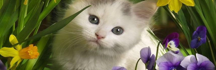 Angelcat Haven Feline Rescue Quot Havens Have No Boundaries Quot