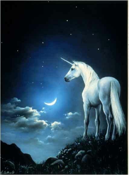 Unicorn S Meadow