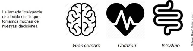 tres cerebros ser humano